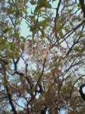 050429_miharu_2